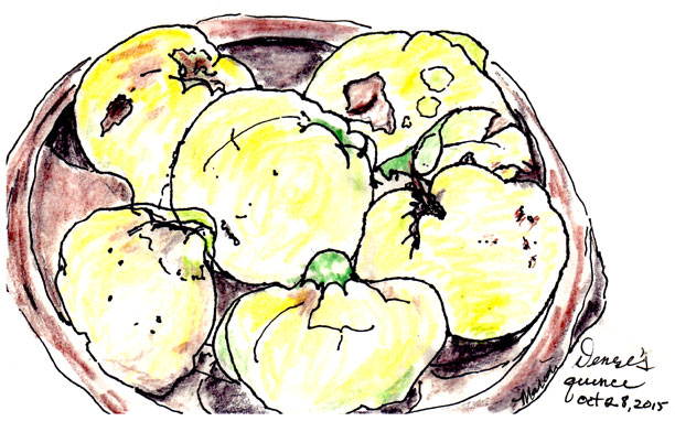 Here's a lively drawing of a bowl of quince drawn by Marion Newton, grown by Denise Smith, made into quince butter by Jeanie McLerie and eaten by Monica Rude. Now that's Community!!